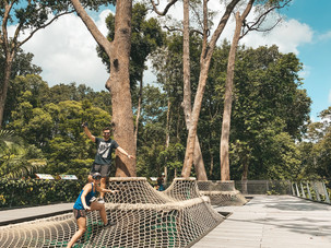 Singapore Botanic gardens Learning Forest nets