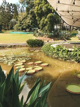 Singapore Botanic Gardens shaw symphony stage