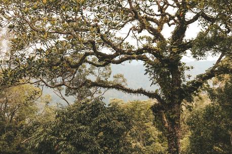 Penang hill the habitat treetop walk