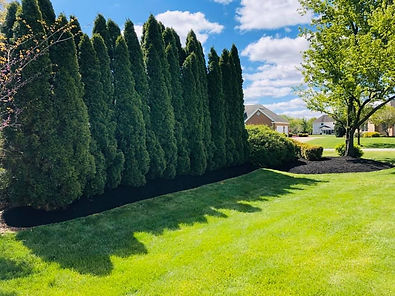 Greenery Scenery Lawn Care | Tree Removal | Columbus, OH