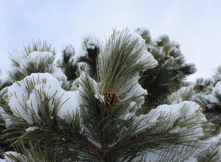 Winter: A Love Poem