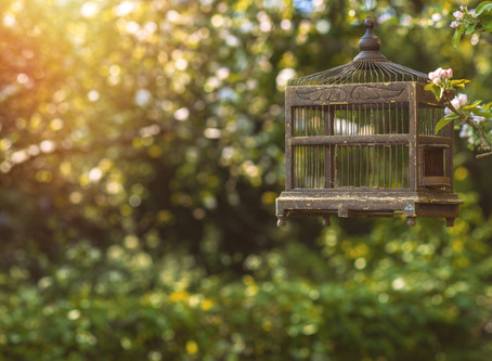 The Cage I Built - and How I'm Breaking Free