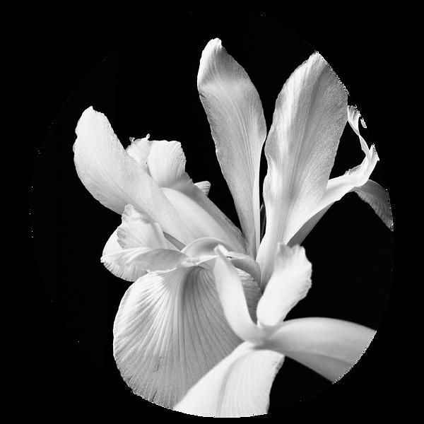 generic-05-black-white-flower-closeup.pn