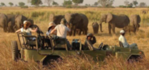 safari-africano.jpg