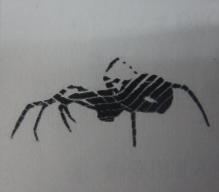 スパイダー クモ