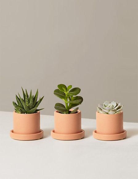 the-sill_succulent-trio_variant_mini_hyd