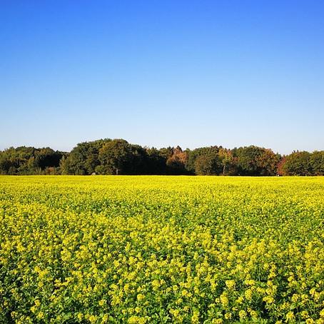 Fertilidade do solo e nutrientes para as plantas