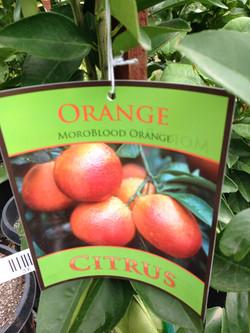 Citrus (Blood Orange)