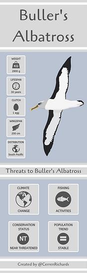 Copy of Buller's Albatross.png