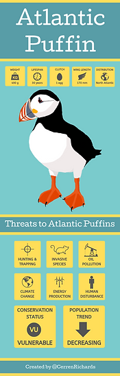 Copy of Atlantic Puffin (3).png