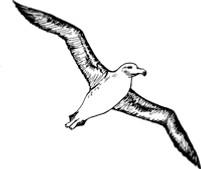 Albatros_Logo_75dpi_200x168.jpg