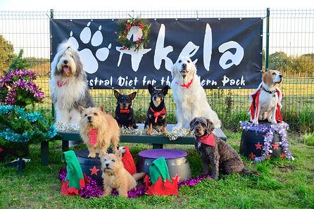 joe dog training christmas photo.jpg