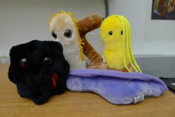 Stuffed Animal Pathogens: HIV, Shigella, Ebola, Helicobacter pylori, Trypanosoma brucei