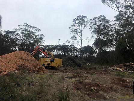 land clearing tasmania arborists