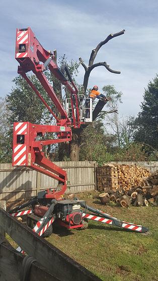 arborist tree felling tasmania