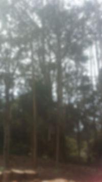 confined space tree removal arborist tasmania