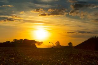 John Deere Golden Light