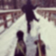 FETCH SNOW.jpg
