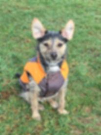 weaverville asheville nc dog walker pet sitter