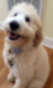 professional pet sitter- asheville,nc