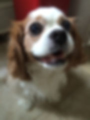 weaverville asheville nc pet sitters/dog walkers