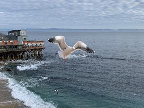 Masking in Monterey