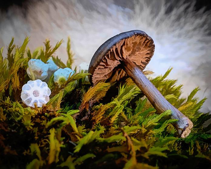 Mushroom, Moss, and Flower