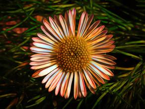 Topaz and Tiny Flowers