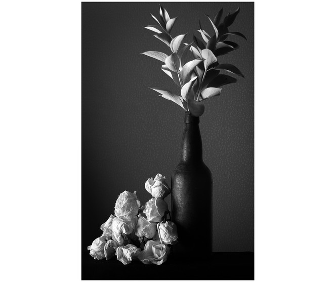 White Leaves and Dried Roses