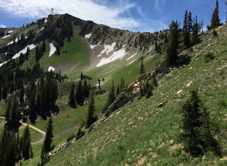 Hiking in Snowbird