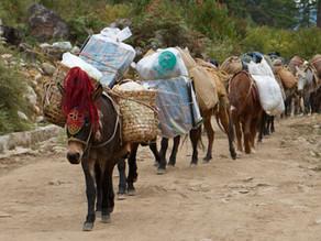 Trekking in Bhutan: Day 1 from Drukyel Dzong