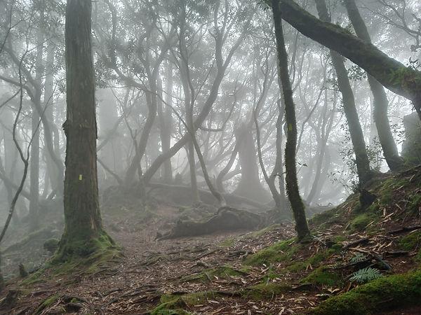 塔魔巴之起霧的樹林1.jpg