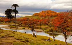 RES. NACIONAL CHINA MUERTA | CHILE