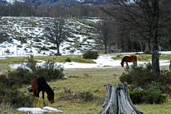 RES. NACIONAL TRAPARANDA | CHILE