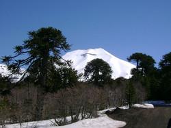RESERVA NAC. MALALCAHUELLO   CHILE