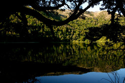 RESERVA NACIONAL MALLECO | CHILE