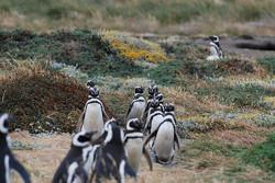 Punta Arenas | Chile