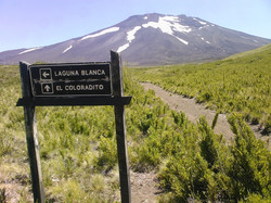 RESERVA NACIONAL NALCAS | CHILE