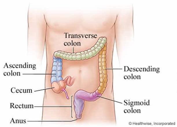 Anatomy of colon