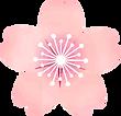 桜の花2.png