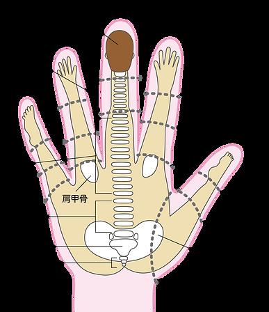 左手の甲と関連部位 長崎 整体
