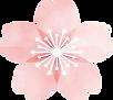 桜の花.png
