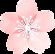 桜の花1.png
