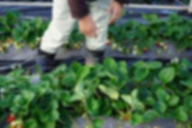 青々と健康的な葉