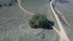 Love Tree 2