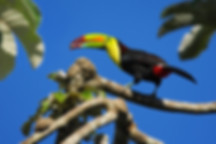 Costa Rica .jpeg