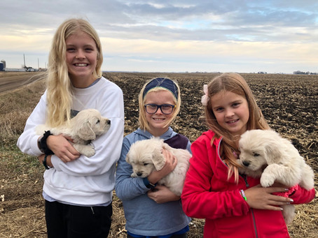All our puppies have found homes! Our next litter is planned for spring of 2020.
