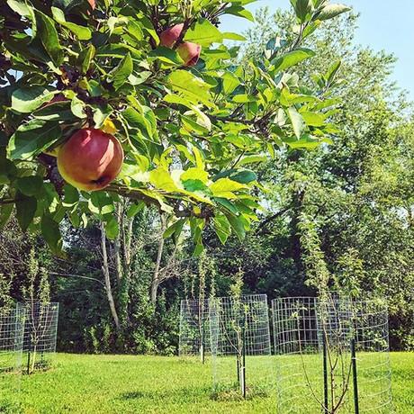 Mayhem Orchard 2018