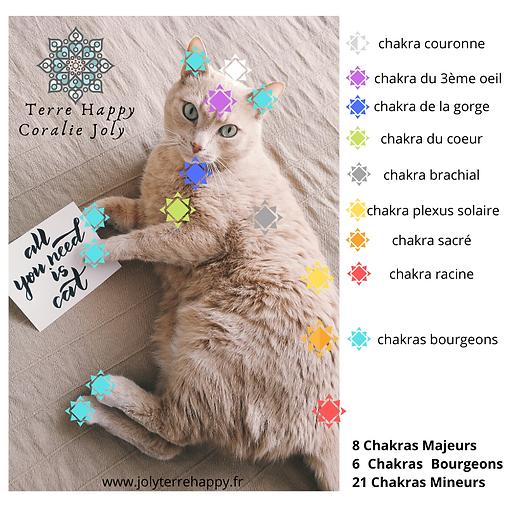 Terre Happy / chakras des animaux