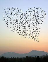 amour et relation amoureuse
